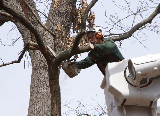Pasadena Tree Sevice worker