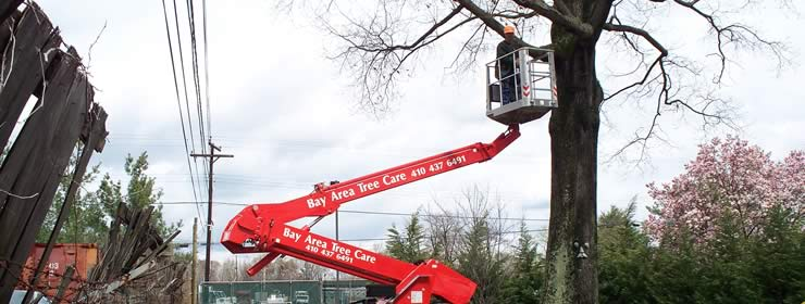 Tree Services in Severna Park