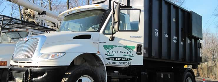 Tree Services in Pasadena